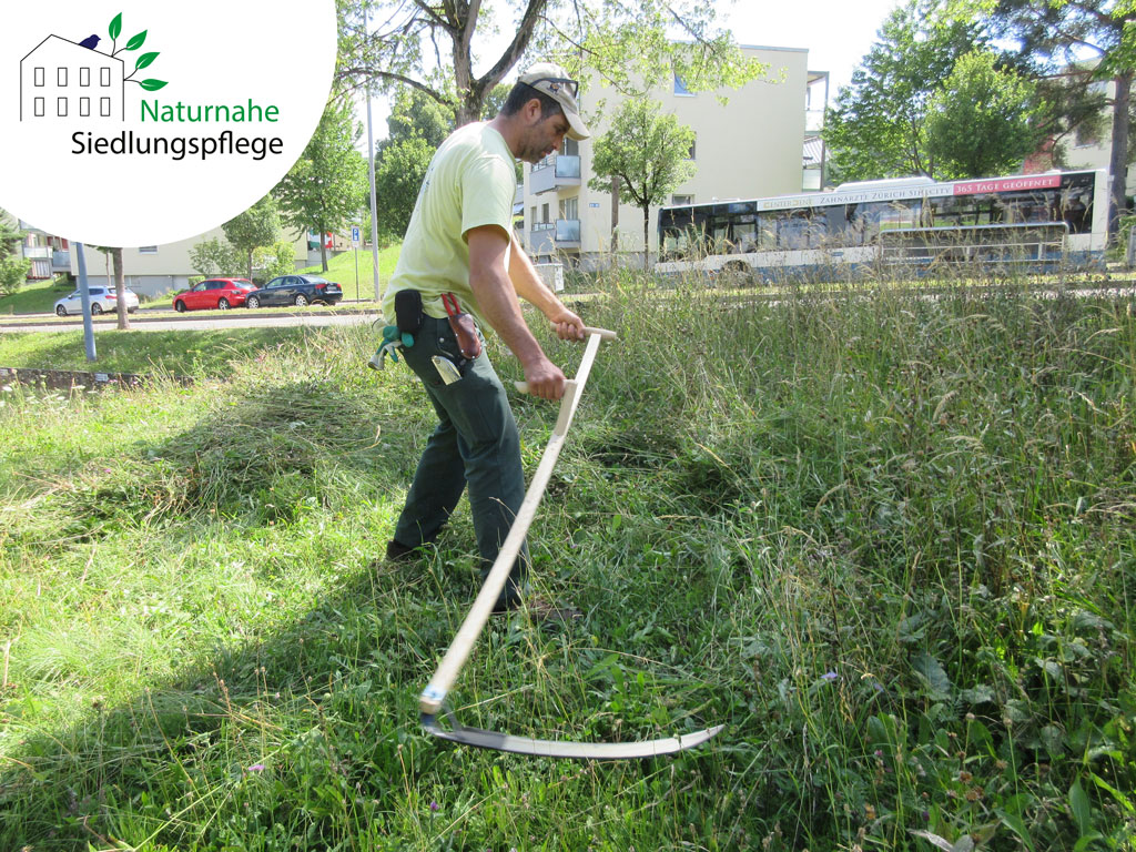 Gärtnermeister Rafael Schmid greift für den Artenschutz auch mal zur Sense