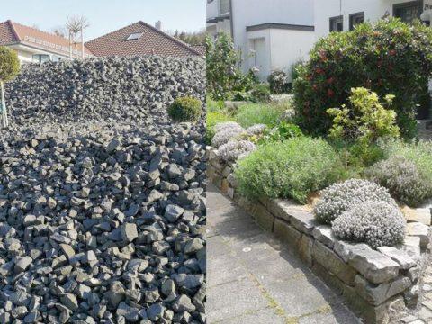 Schottergarten vs Naturgarten