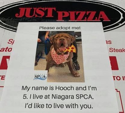 Hundevermittlung mit Pizzaschachtel