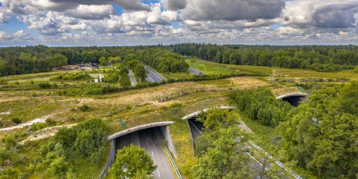 Grünbrücken retten Tierleben
