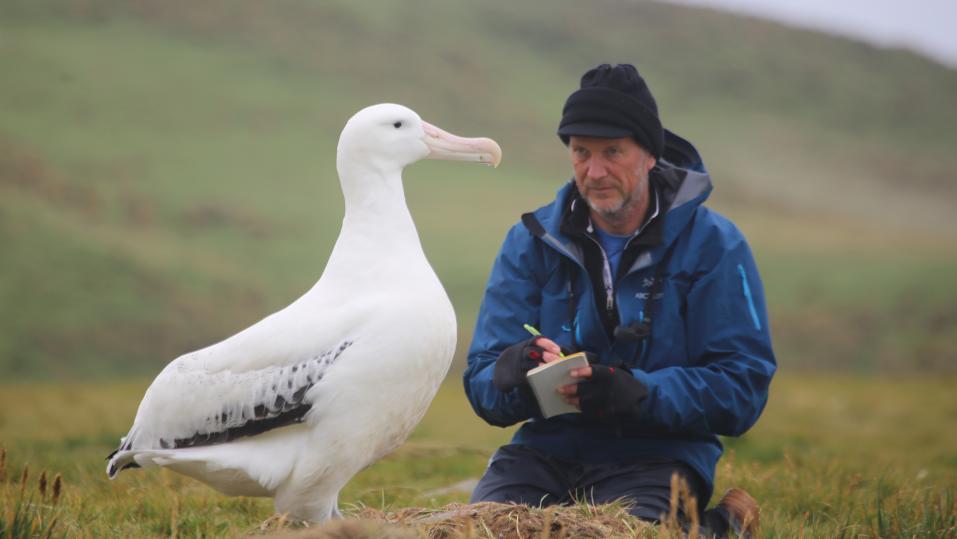Albatrosse als Meerespolizei