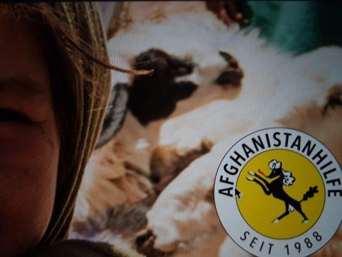 Gesicht eines afghanischen Mädchens, im Hintergrund Schafe, im Vordergrund rechts Symbol der Afghanistanhilfe