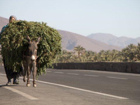 Frau mit schwer beladenem Esel