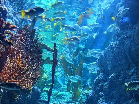 Korallenriff von Shifaz abdul Hakkim / Unsplash