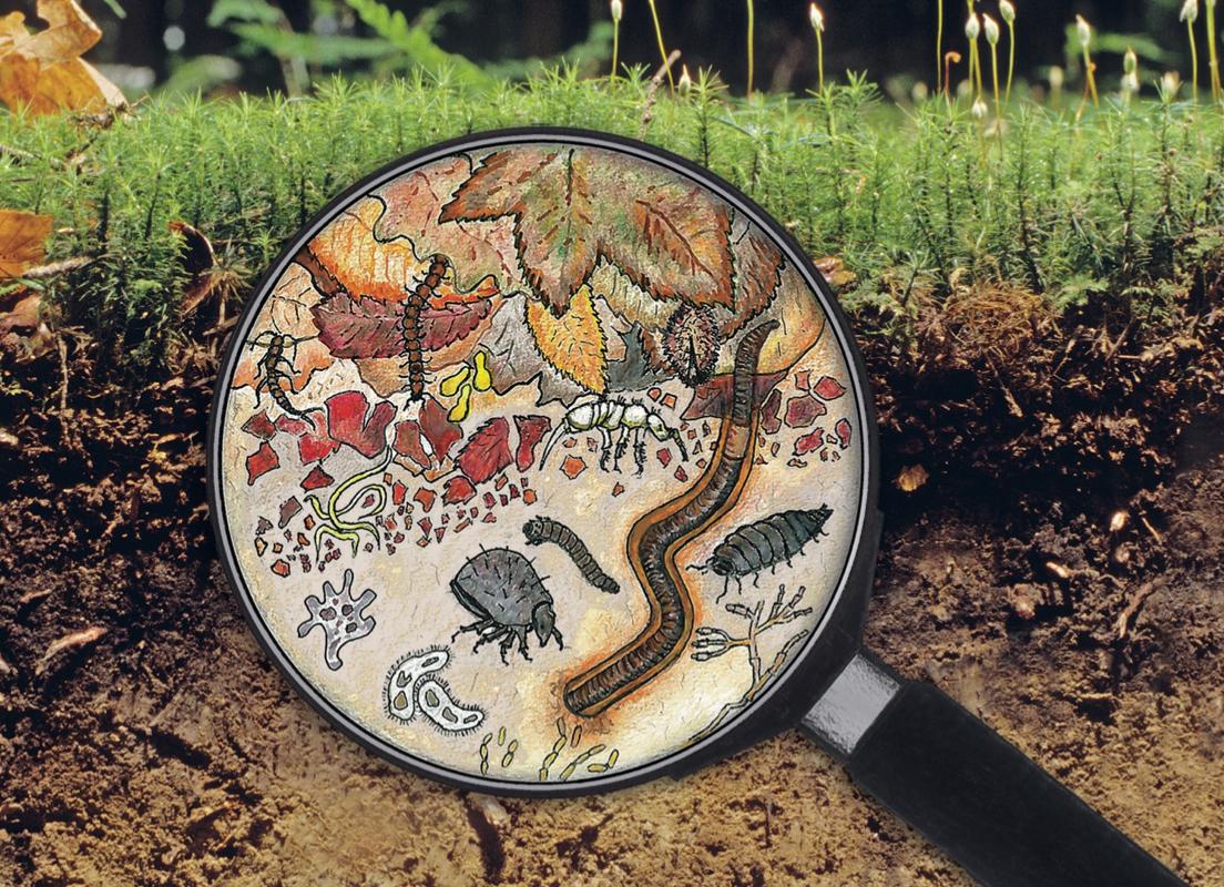 Ein gesunder Boden verfügt über eine grosse Artenvielfalt an Bodentieren.