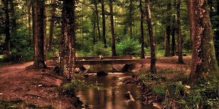 Wald mit Waldboden und Bach.