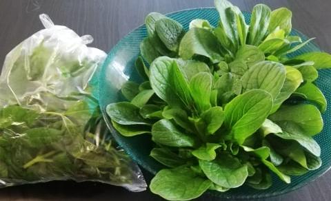 Salat im Plastikbeutel und in einer Schüssel mit Wasser