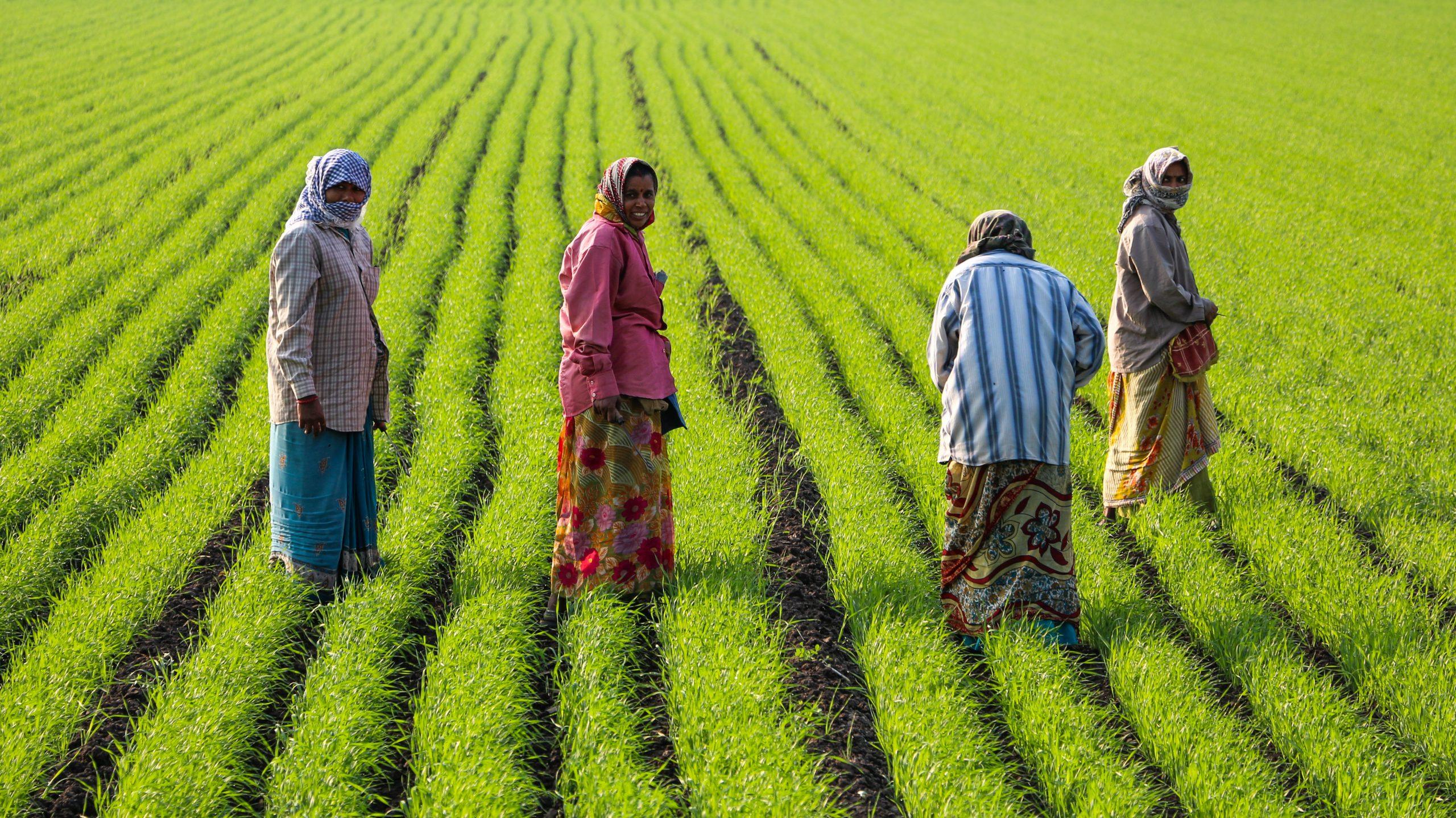 Feldarbeit in Gujarat