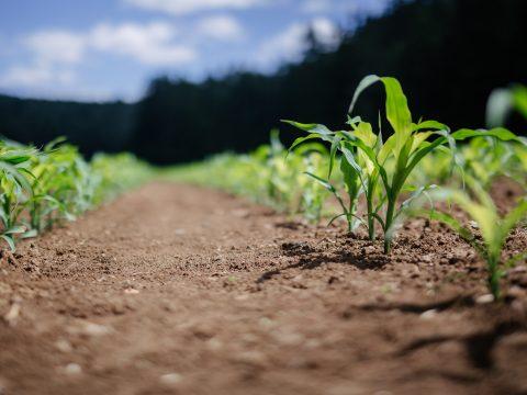 Landwirtschaftliches Feld mit Pflanzen