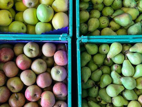 Äpfel und Birnen in Kartons