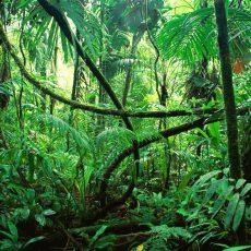 Bäume und Farne im Regenwald von Chiapas, Mexiko